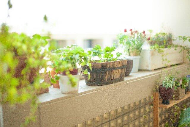 運気を上げる観葉植物