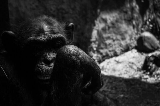 やりすぎ都市伝説 猿の惑星に隠されたメッセージ