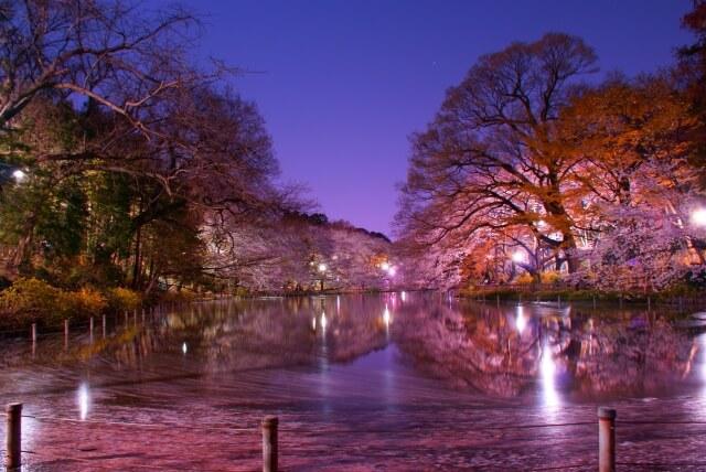 桜の下には死体が埋まっている 井の頭公園