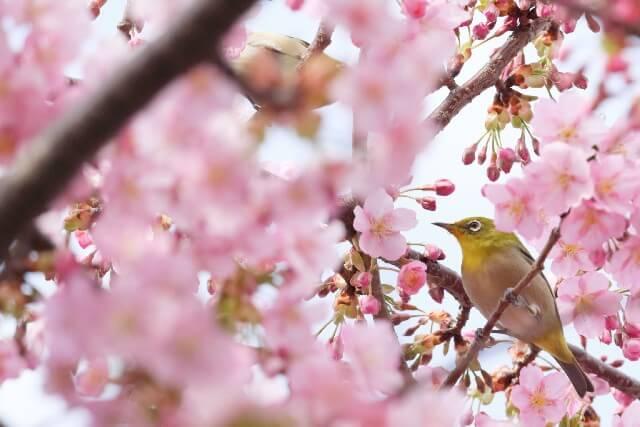 桜の下には死体が埋まっている 庭
