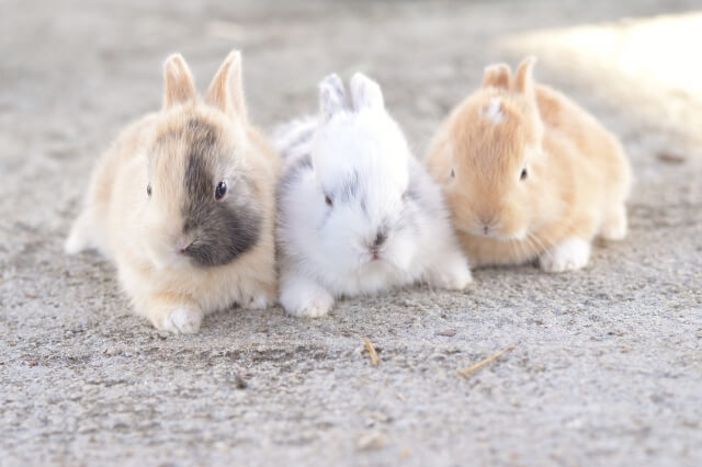 呪い返し ウサギ