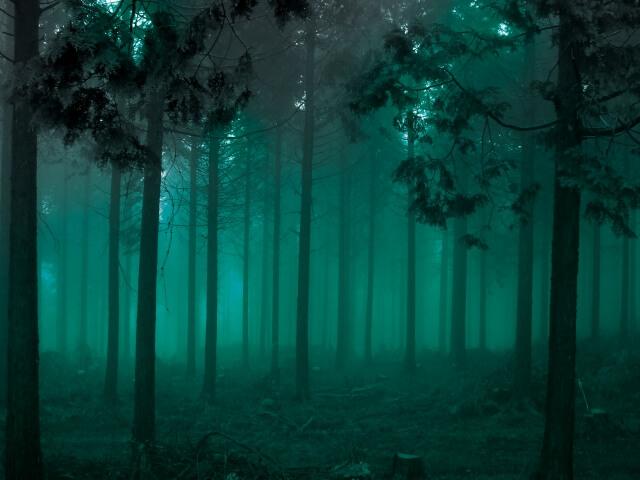幽霊が見える音 森