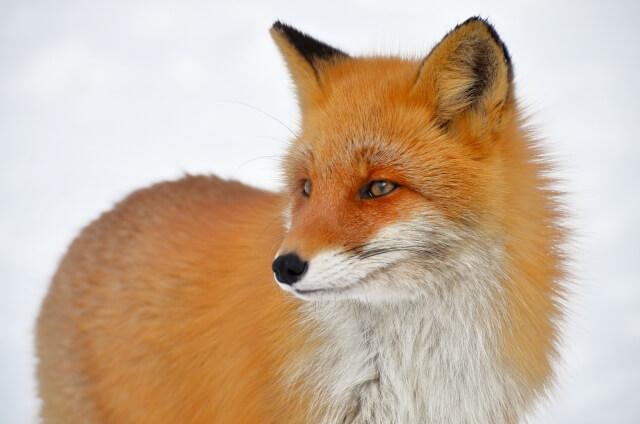 稲荷 参拝 狐