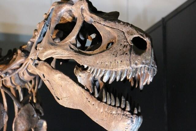 恐竜オーパーツ