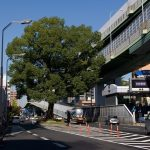 """国道41号線・東片端交差点のクスノキが切られない理由は""""祟り""""のせいか?"""