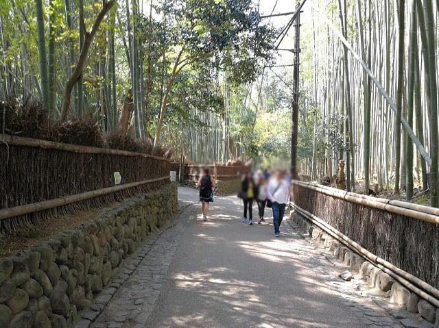 野宮神社 竹林