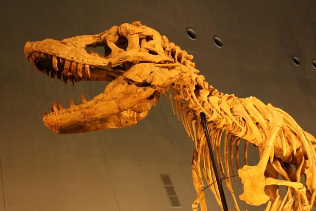 十二支 恐竜