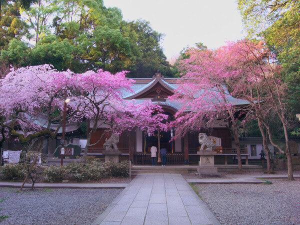 カタカムナ 保久良神社