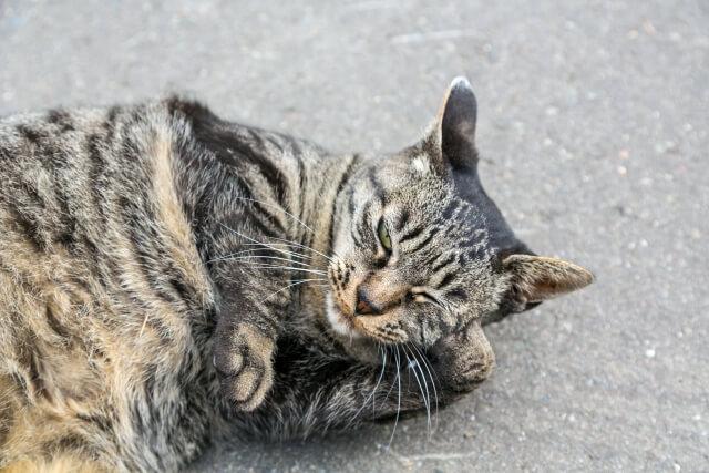 招き猫 処分方法 猫