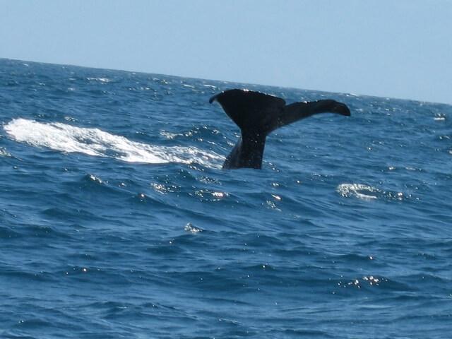 カバゴン ニュージーランド 海