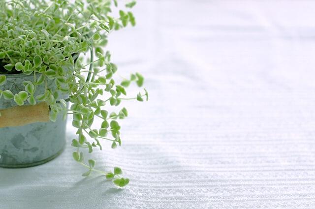 断桃花法 植木鉢 観葉植物